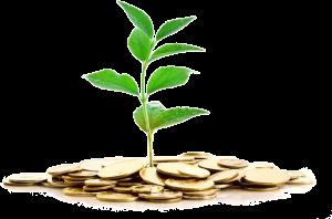 argent-plante